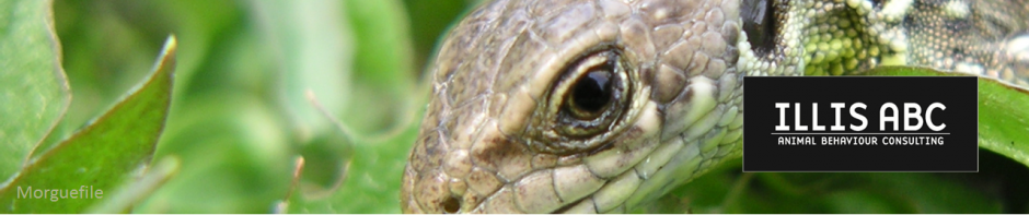 cropped-reptil1.png
