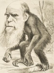 A picture containing text, primate, mammal  Description automatically generated